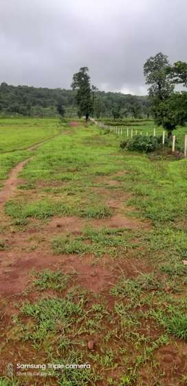 40 acre open agriculture land for sale