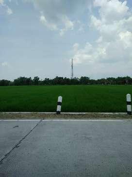 DiJual Tanah Sawah Luas 3165m SHM
