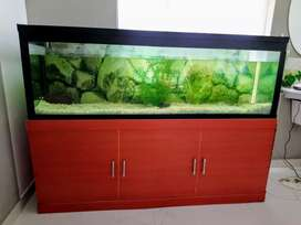 6 feet aquarium with stand and white polished 50kg pebbles