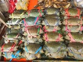 Terlaris Kepiting Bakau Hidup Bisa Dikirim Keseluruh Indonesia