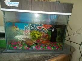Fish Tank and 2  fish set