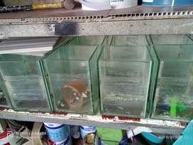 Aquarium bekas cupang