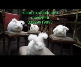 English angora .giant angora .newziland white .Flemish and loops