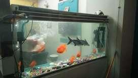 Fish port sale Karna he  with 30000 fish Ke sath