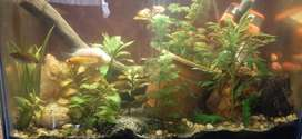 Plant aquarium with fish,filter motor,led light