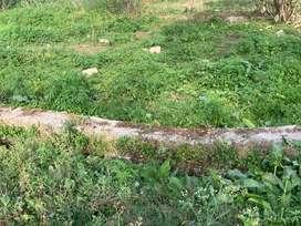 Ajit colony ,karnal colony ,hazuri bagh ,trilokpur