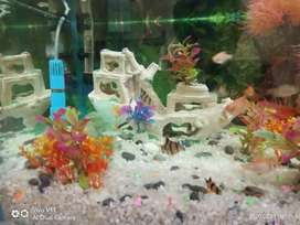 Whole Aquarium with all accessories and fish for sale