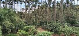 Vythiri land for sale