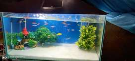 I wnt to sell my aquarium