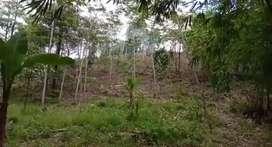 Tanah kebun siap investasi