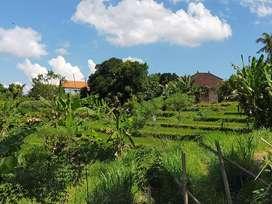 tanah bonus rumah blm di finishing di kebo iwa denpasar,dpt view sawah