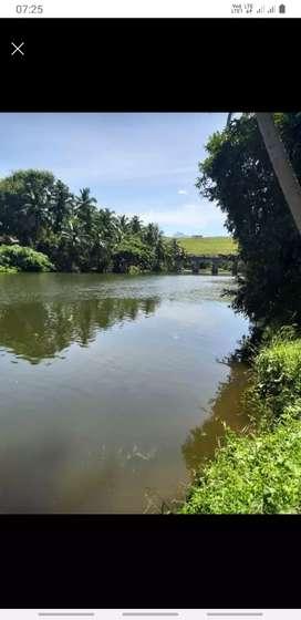 Aliyar river said coconut farm land sale