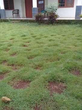 Pasang rumput peking permeter