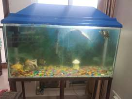 Fish Aquarium with stand, heater, pump and fishes in Sector 92 Gurgaon