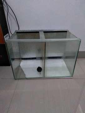 Jual aquarium sekat progress ikan louhan