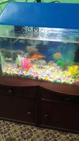 fish Aquarian