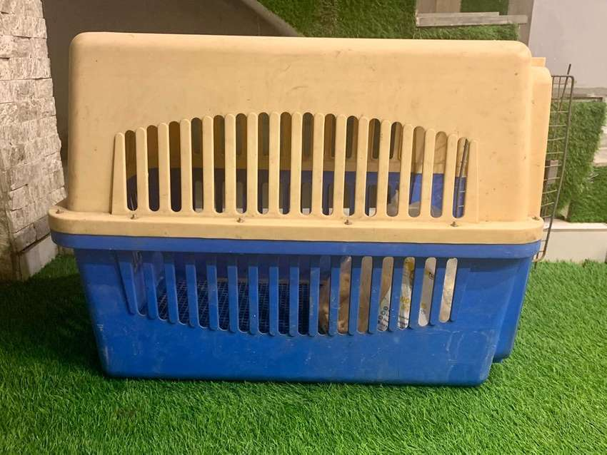 Dog  large Jet Box and carrier Box 0