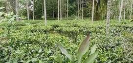 35kotha all papers ok one owner.tea garden of 25 kotha.assamtypehouse.