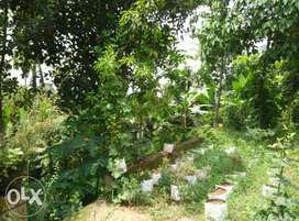 85 cent land with house for sale or exchange