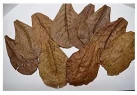 NATURALLY DRIED ALMOND LEAF