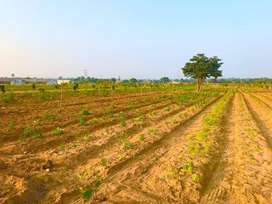 Farm plots for sale with plantation at kandukur
