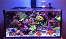 Ikan hias Laut fullset beserta Aquarium