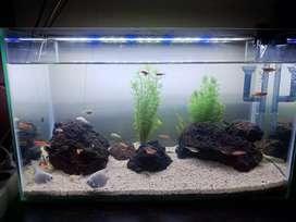 Aquarium fullset