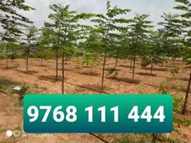 Get Dual income by Farm Land 605sqyds Sandal plants at Poleypally SEZ
