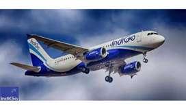 URGENT REQUIRMENT IN INDIGO AIRLINES