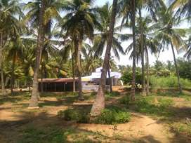 Coconut farm sale dharapuram