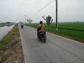 Lokasi lahan  sawah di pinggir jalan