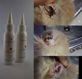 Obat Pembersih Telinga, Obat Otitis, Dan Obat Earmites Kucing