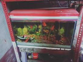 A 2ft aquarium with the top cover.