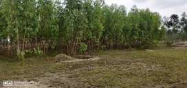 Padapai agriculture land