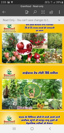 Agriculture plant selling job