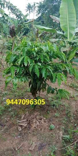 land in palakal.only 4km to thrissur town