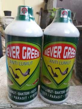 NEVER GREEN 1000 ml ( OBAT KOLAM IKAN / AQUARIUM )