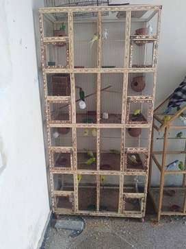 Budgies Birds Cage for Sale