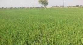 15 to 50 Kanal Agricultural Land For Housing Society/ Town..