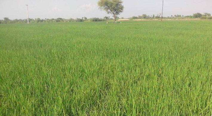 15 to 50 Kanal Agricultural Land For Housing Society/ Town.. 0