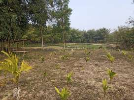 Land for sale in dimapur
