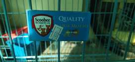 Foldable dog cage up for sale