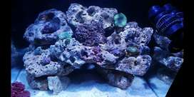 Saltwater Aquarium For sale with stand