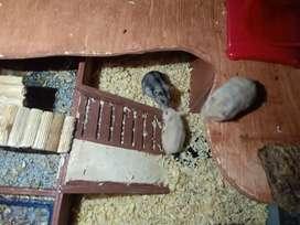 Hamster ww jinak