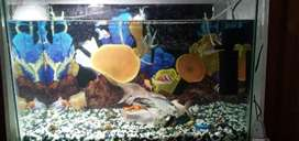 fish aquarium Brand new argent sale just tank srf serius buyer content