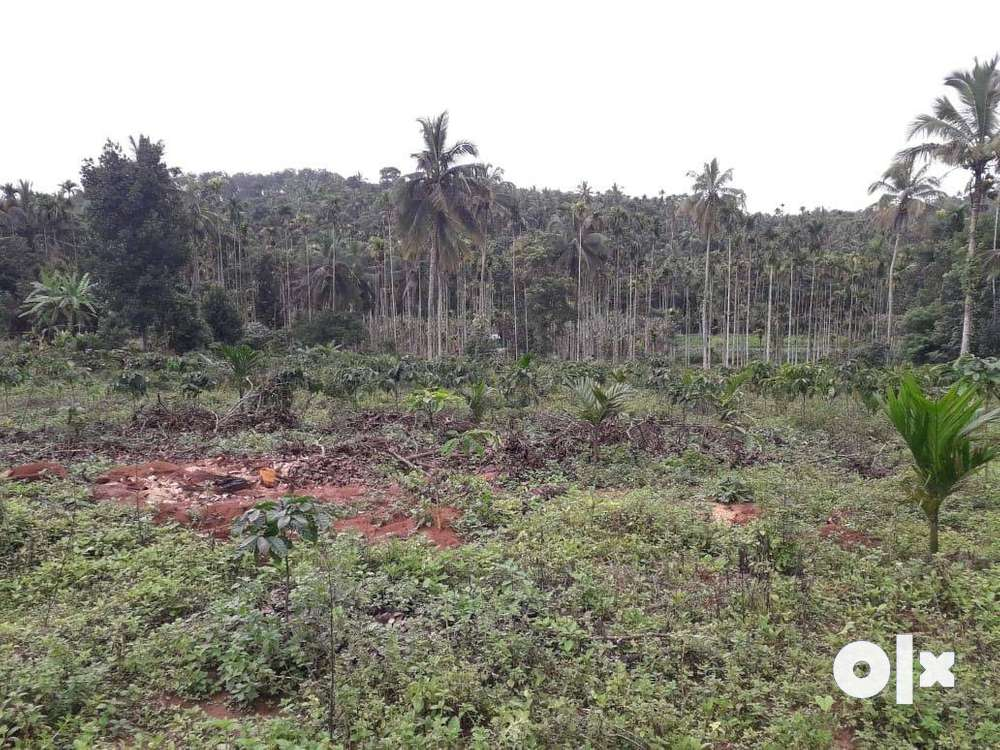 agriculture land for sale in wayanad