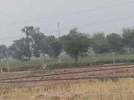 Agriculture plot in good location alwar near tata showroon bhugoor