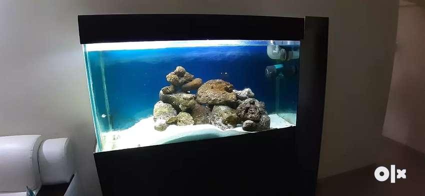 Salt water / marine fish tank 0