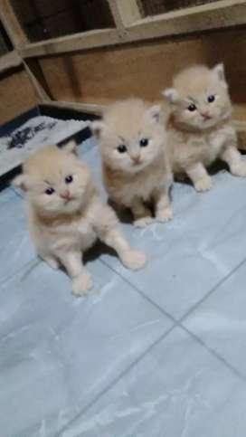 Cari yg mau adop dan sayang kucing