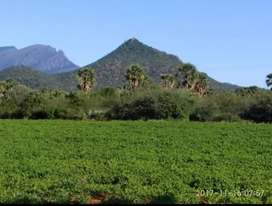 Agricultural Land for lease